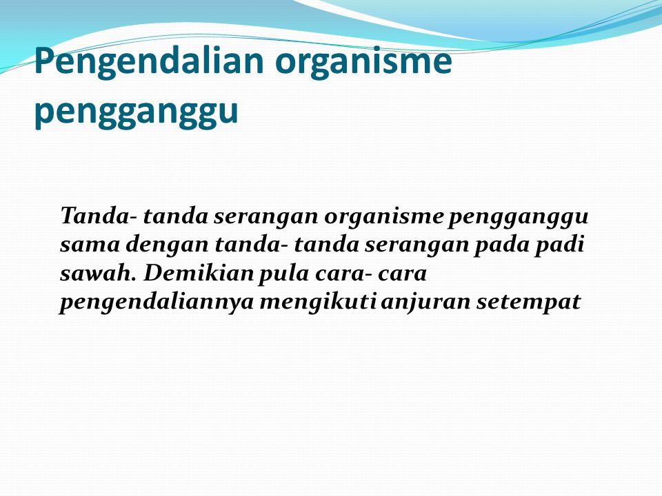 Pengendalian organisme pengganggu