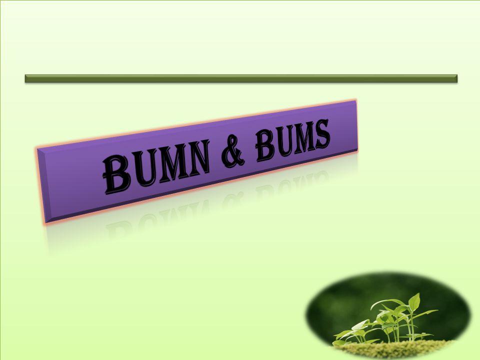 BUMN & bums