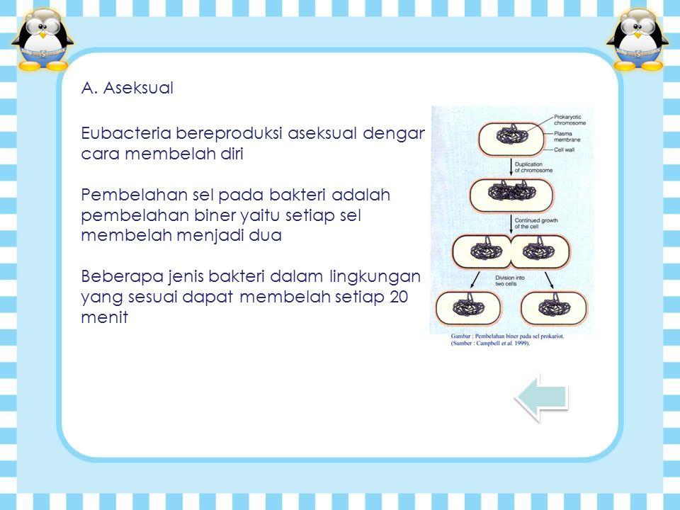 A. Aseksual Eubacteria bereproduksi aseksual dengan cara membelah diri.