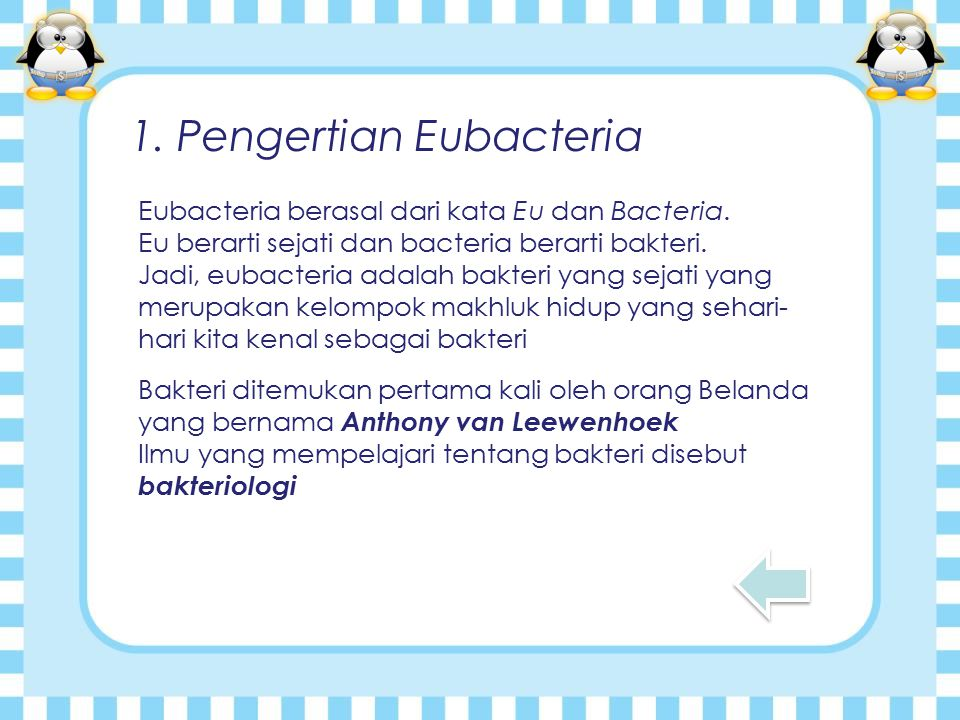 1. Pengertian Eubacteria