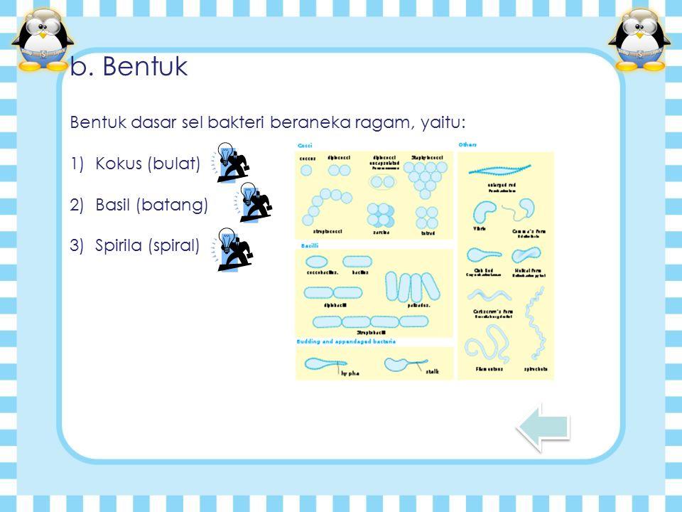 b. Bentuk Bentuk dasar sel bakteri beraneka ragam, yaitu: