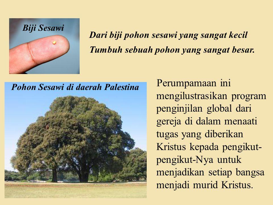 Pohon Sesawi di daerah Palestina