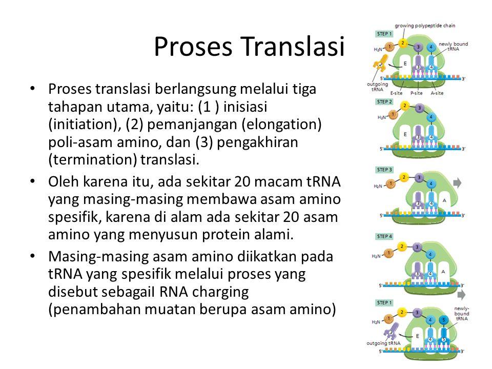 Proses Translasi