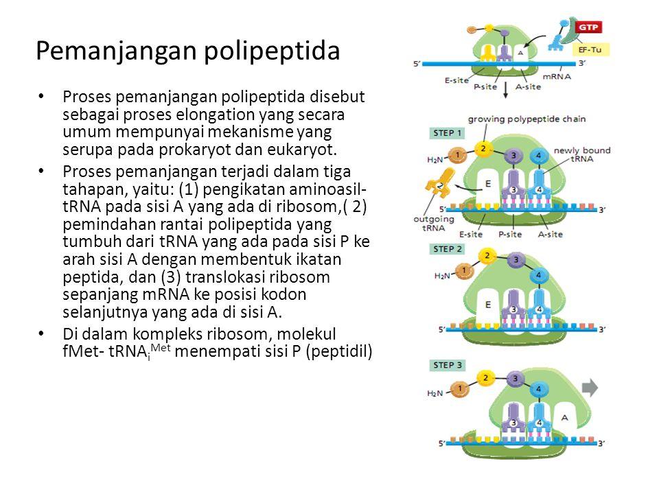Pemanjangan polipeptida