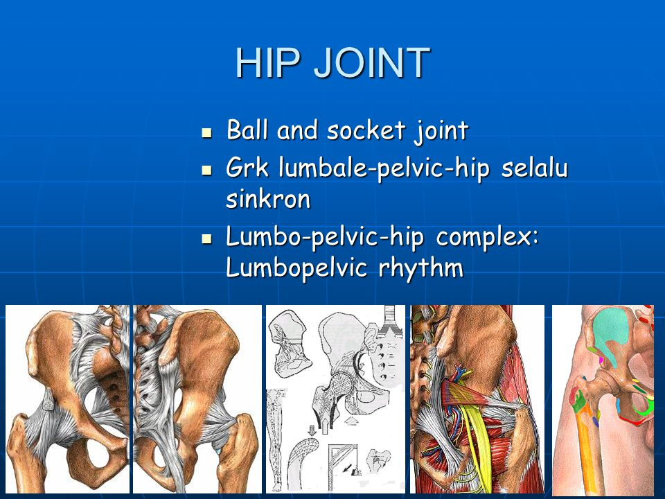 HIP JOINT Ball and socket joint Grk lumbale-pelvic-hip selalu sinkron