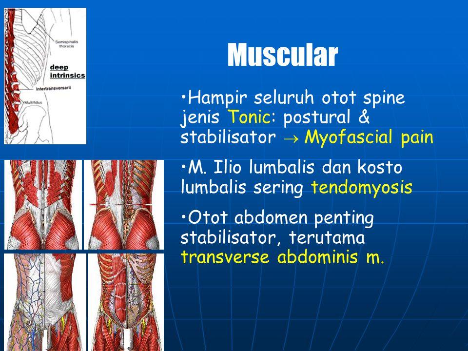 Muscular Hampir seluruh otot spine jenis Tonic: postural & stabilisator  Myofascial pain. M. Ilio lumbalis dan kosto lumbalis sering tendomyosis.