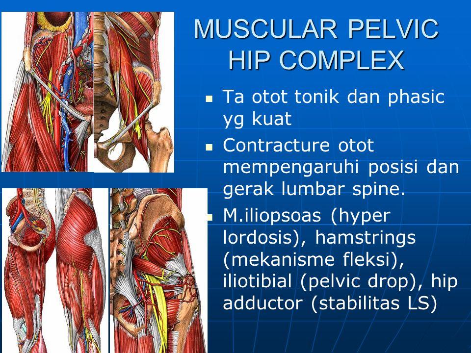 MUSCULAR PELVIC HIP COMPLEX