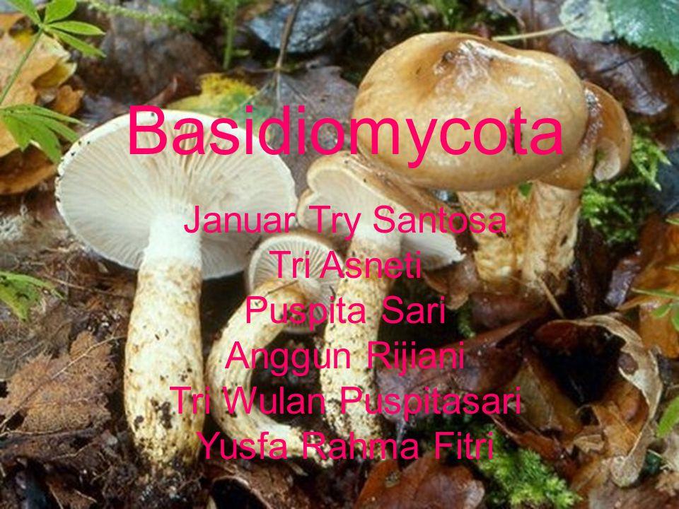 Basidiomycota Januar Try Santosa Tri Asneti Puspita Sari