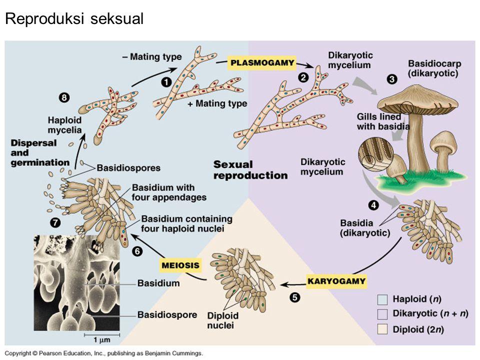 Reproduksi seksual