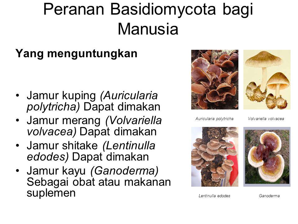 Peranan Basidiomycota bagi Manusia