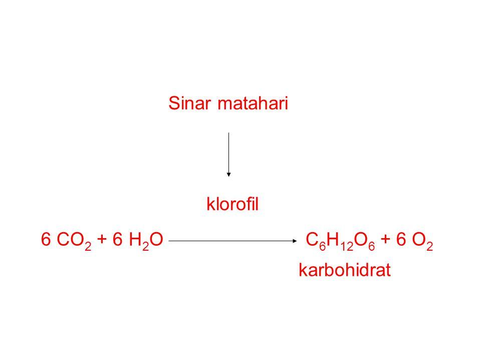 Sinar matahari klorofil 6 CO2 + 6 H2O C6H12O6 + 6 O2 karbohidrat