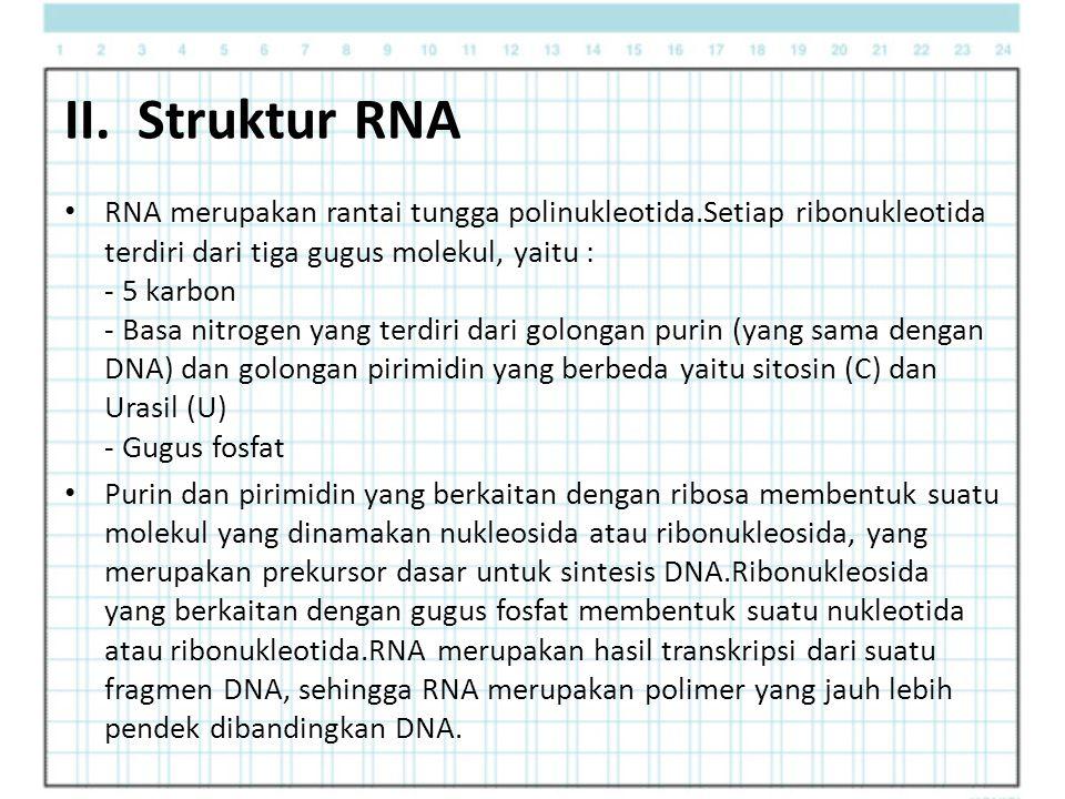 II. Struktur RNA