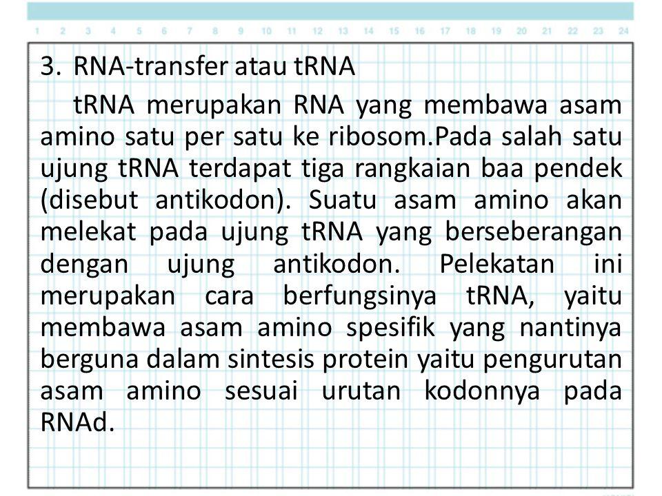 RNA-transfer atau tRNA