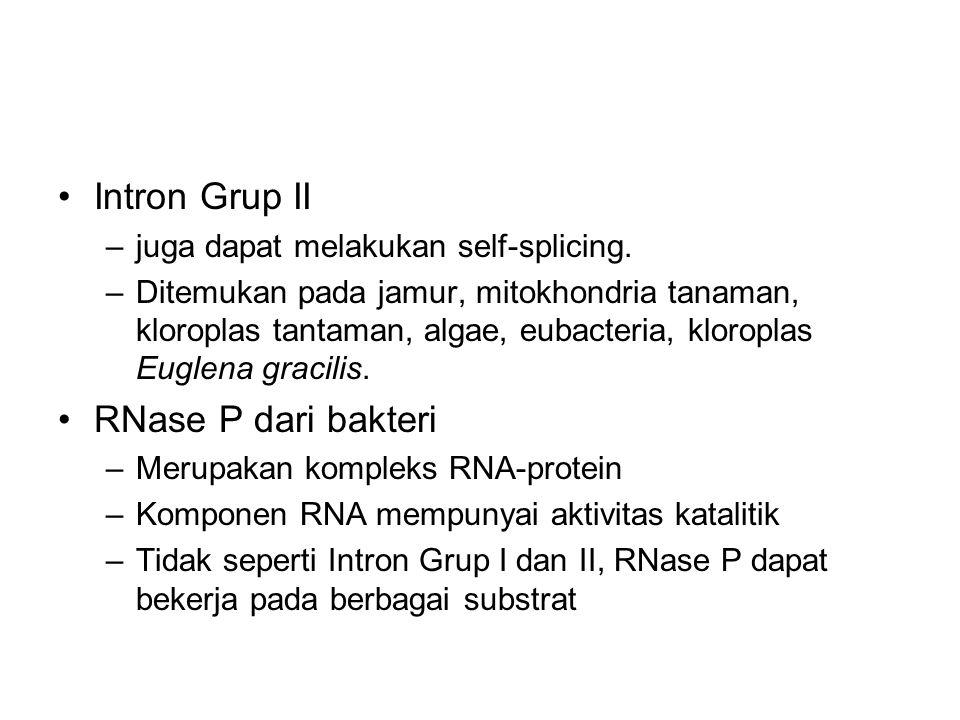 Intron Grup II RNase P dari bakteri