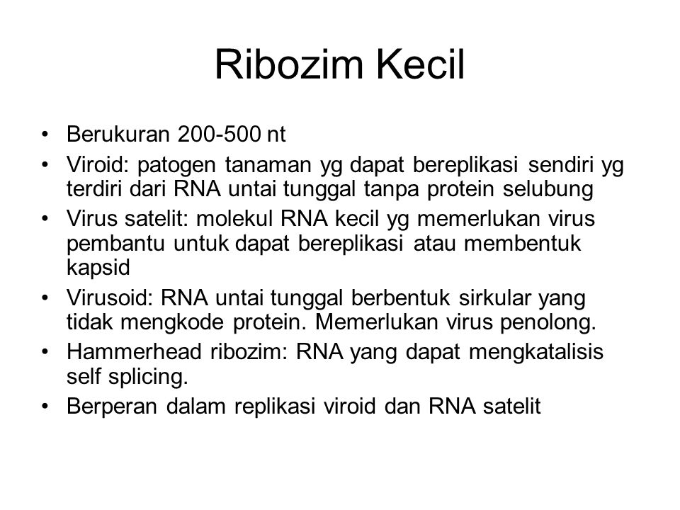 Ribozim Kecil Berukuran 200-500 nt