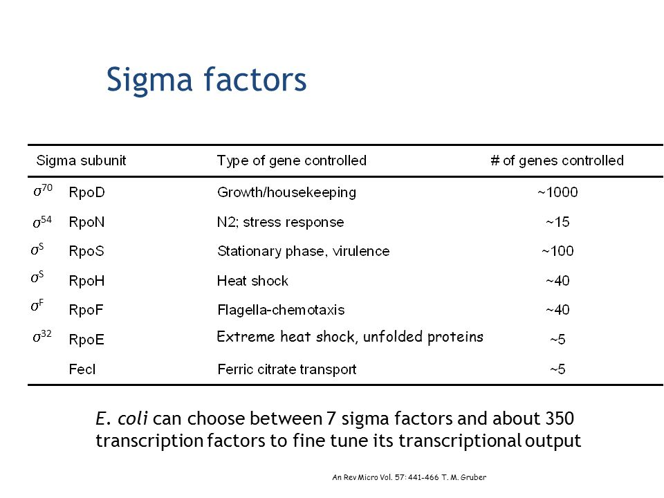 Sigma factors E. coli can choose between 7 sigma factors and about 350