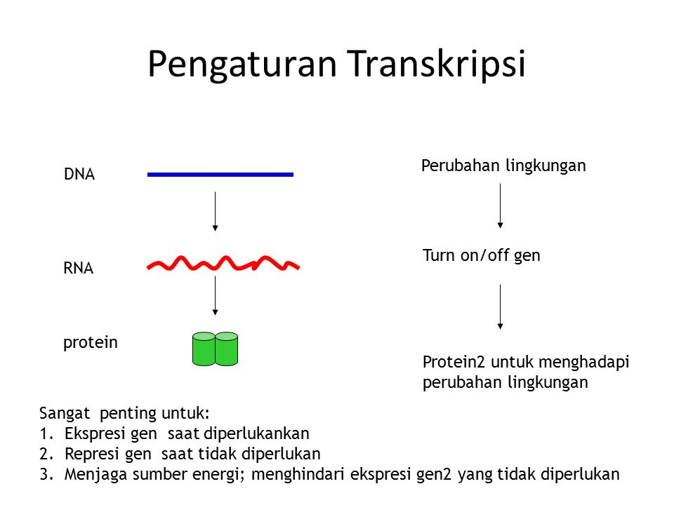 Pengaturan Transkripsi