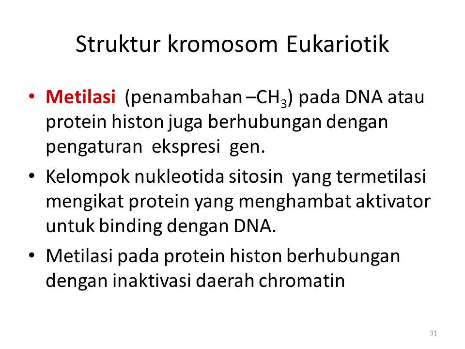 Struktur kromosom Eukariotik