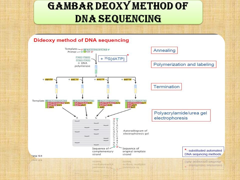 Gambar Deoxy method of DNA sequencing