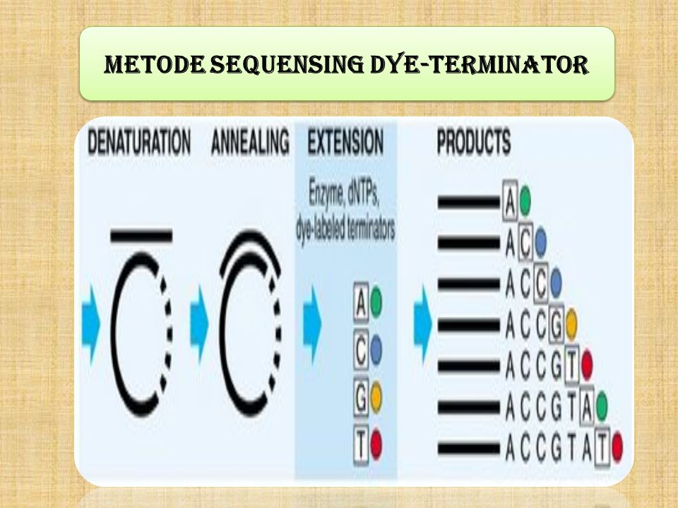Metode sequensing Dye-Terminator