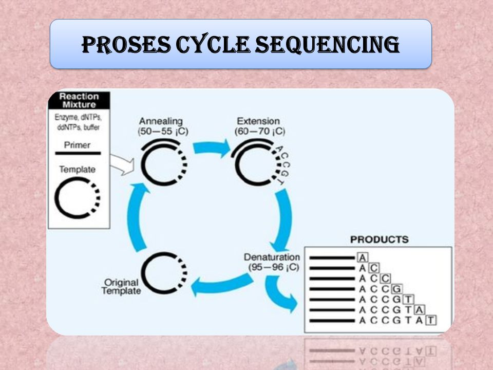 Proses Cycle Sequencing