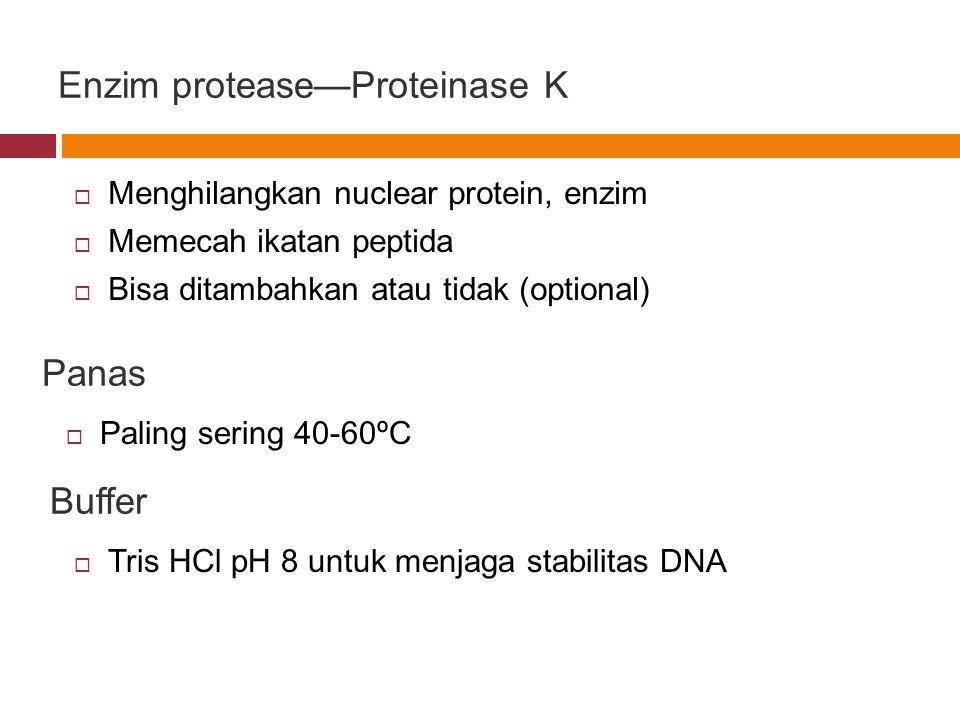 Enzim protease—Proteinase K