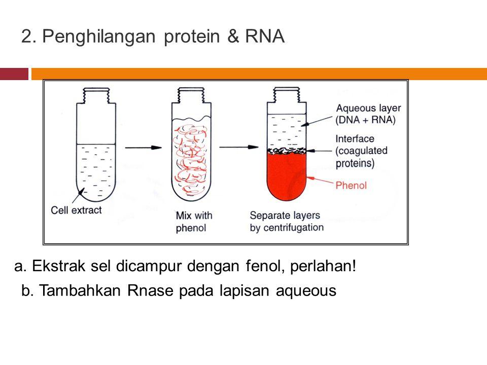 2. Penghilangan protein & RNA