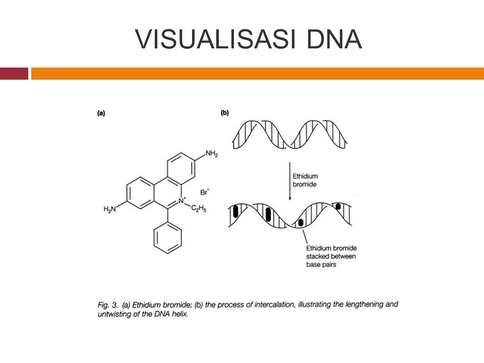 VISUALISASI DNA