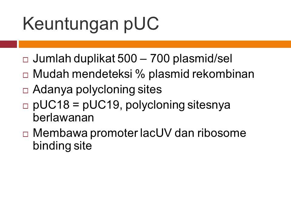 Keuntungan pUC Jumlah duplikat 500 – 700 plasmid/sel