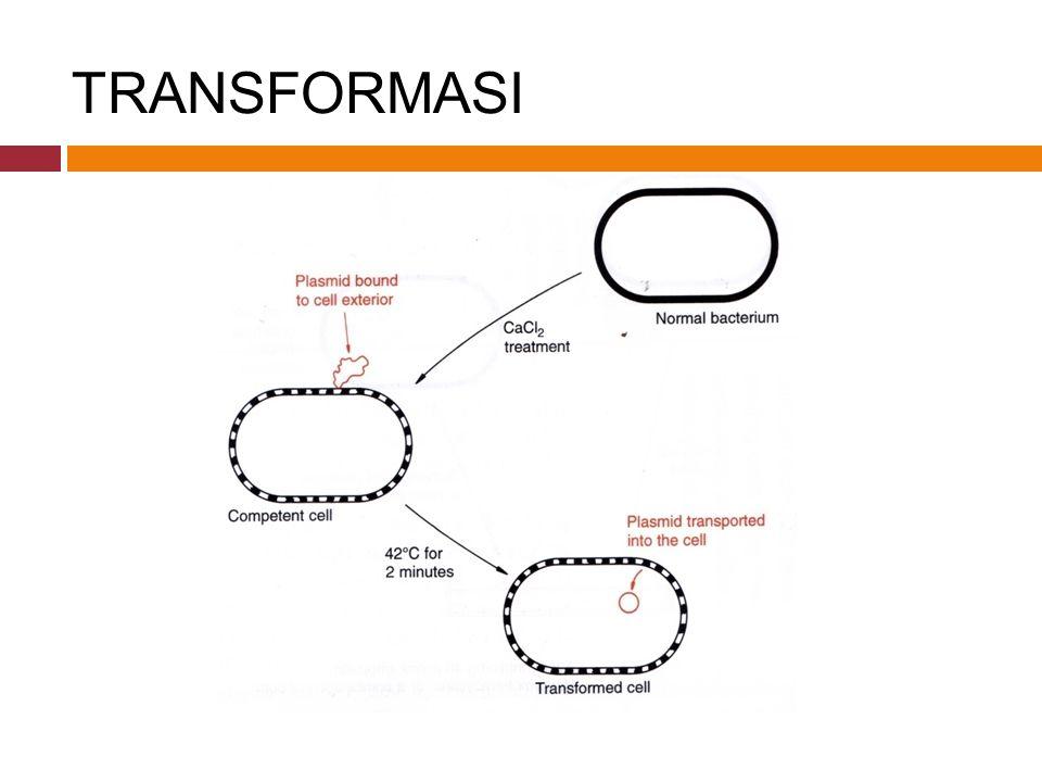 TRANSFORMASI