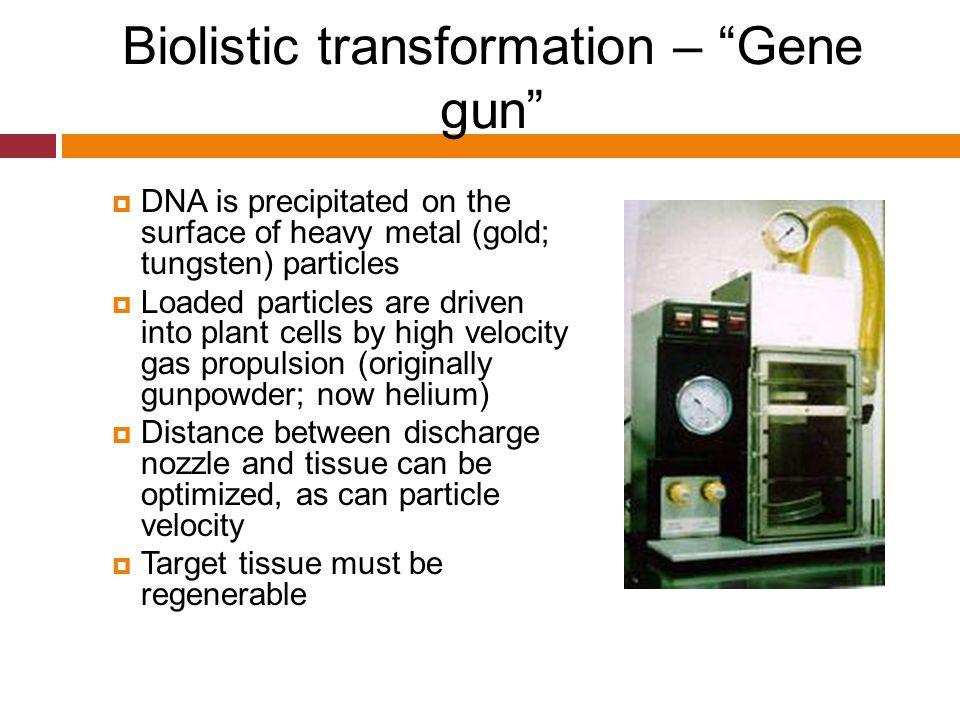 Biolistic transformation – Gene gun