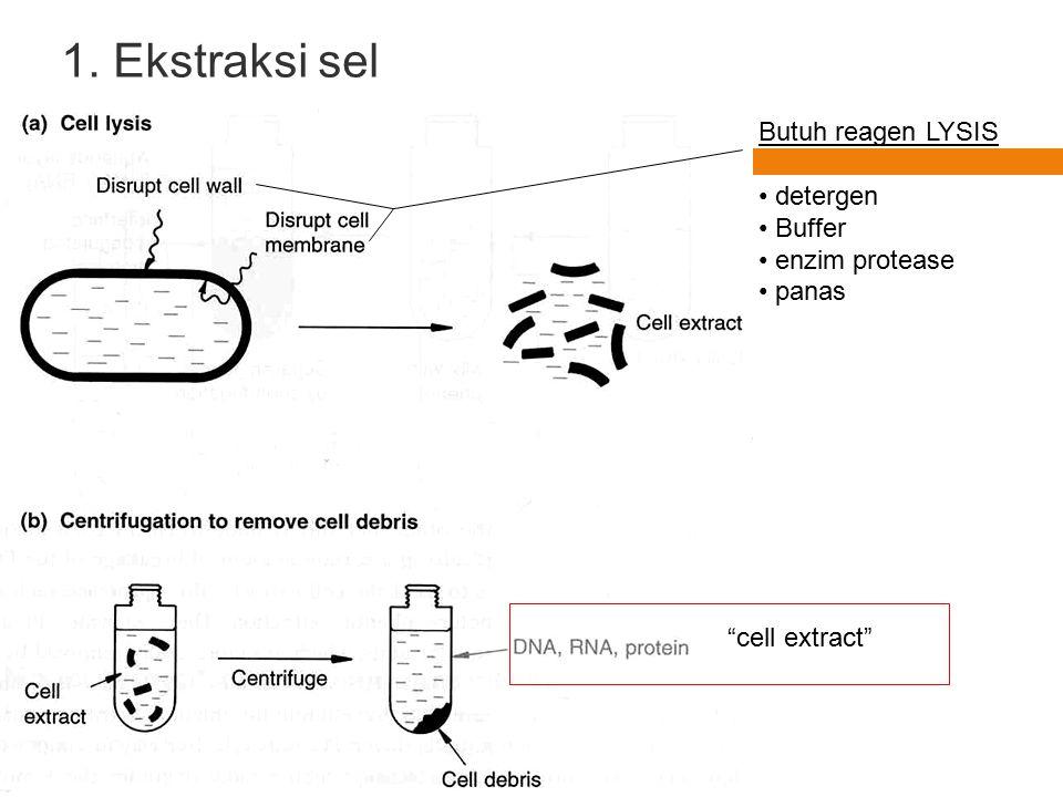 1. Ekstraksi sel Butuh reagen LYSIS detergen Buffer enzim protease
