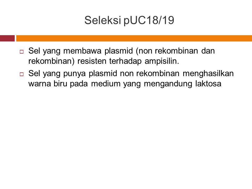 Seleksi pUC18/19 Sel yang membawa plasmid (non rekombinan dan rekombinan) resisten terhadap ampisilin.