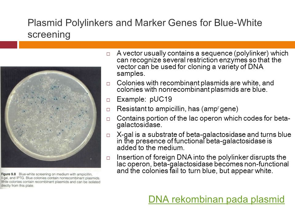 Plasmid Polylinkers and Marker Genes for Blue-White screening