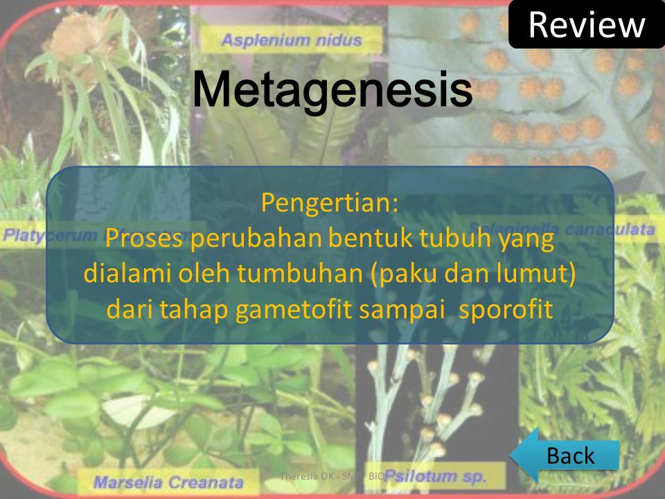 Metagenesis Review Pengertian: