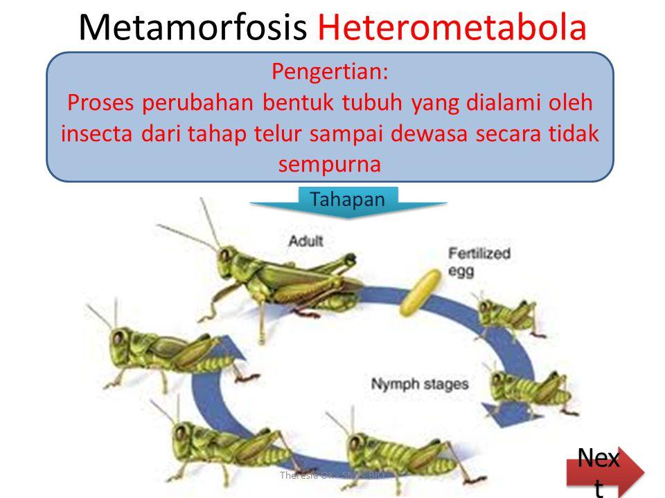 Metamorfosis Heterometabola