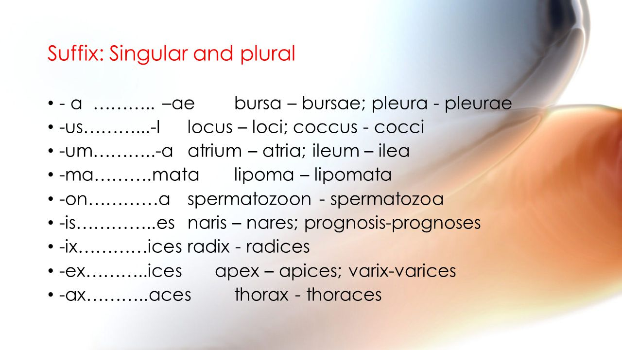 Suffix: Singular and plural