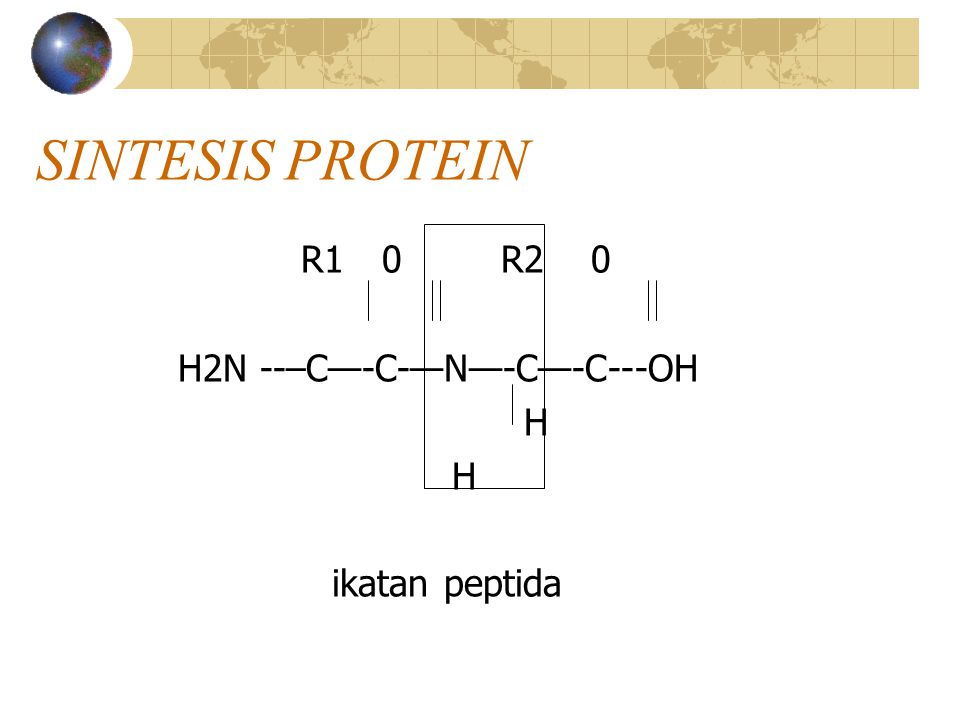 SINTESIS PROTEIN R1 0 R2 0 H2N --–C—-C-—N—-C—-C---OH H ikatan peptida