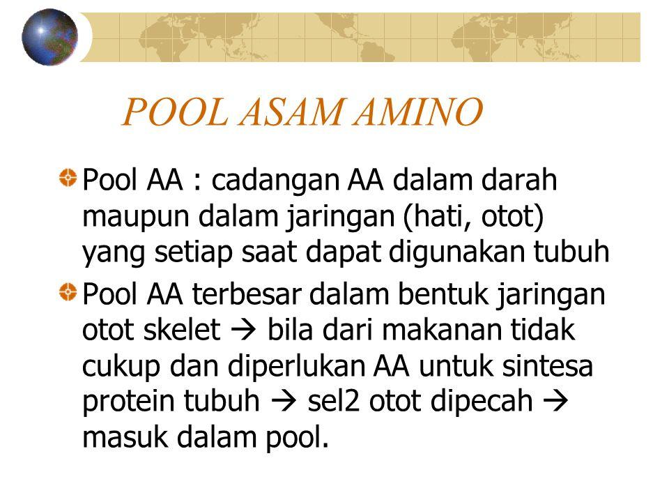 POOL ASAM AMINO Pool AA : cadangan AA dalam darah maupun dalam jaringan (hati, otot) yang setiap saat dapat digunakan tubuh.