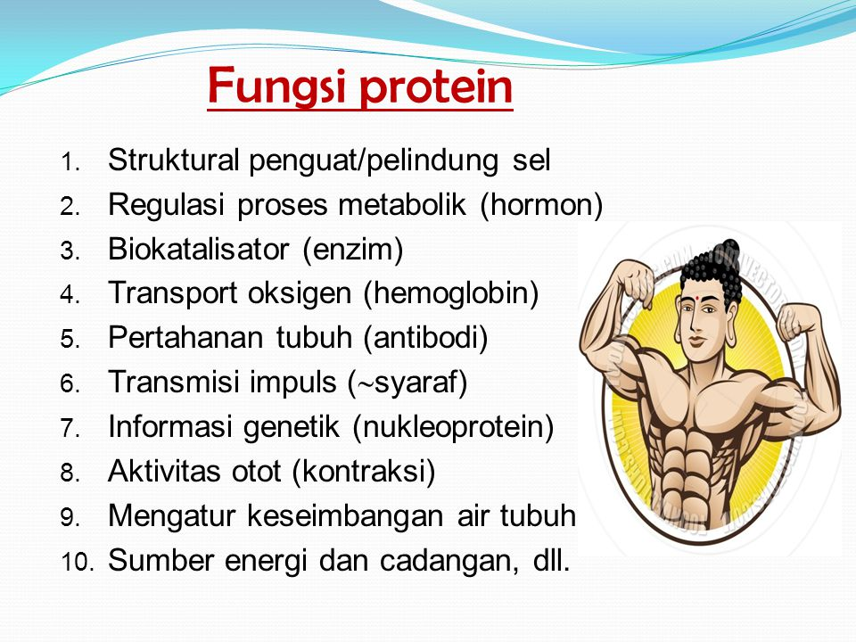 Fungsi protein Struktural penguat/pelindung sel
