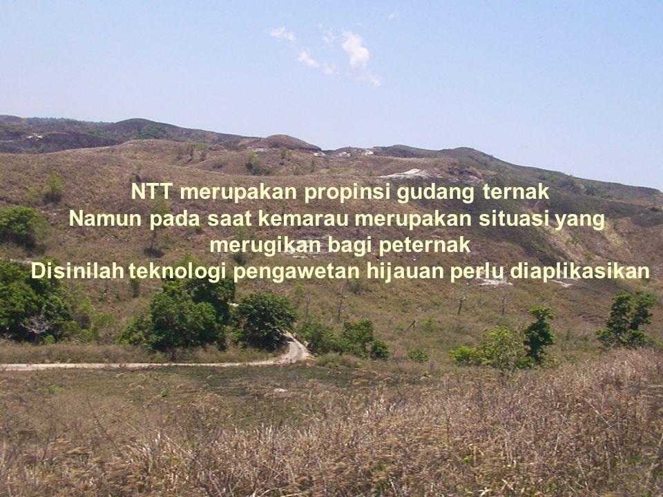 NTT merupakan propinsi gudang ternak
