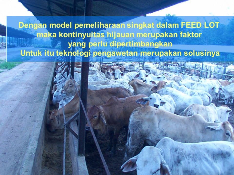 Dengan model pemeliharaan singkat dalam FEED LOT