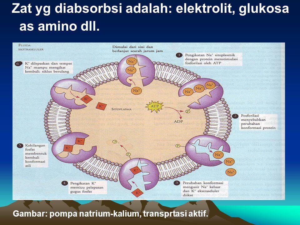 Zat yg diabsorbsi adalah: elektrolit, glukosa as amino dll.