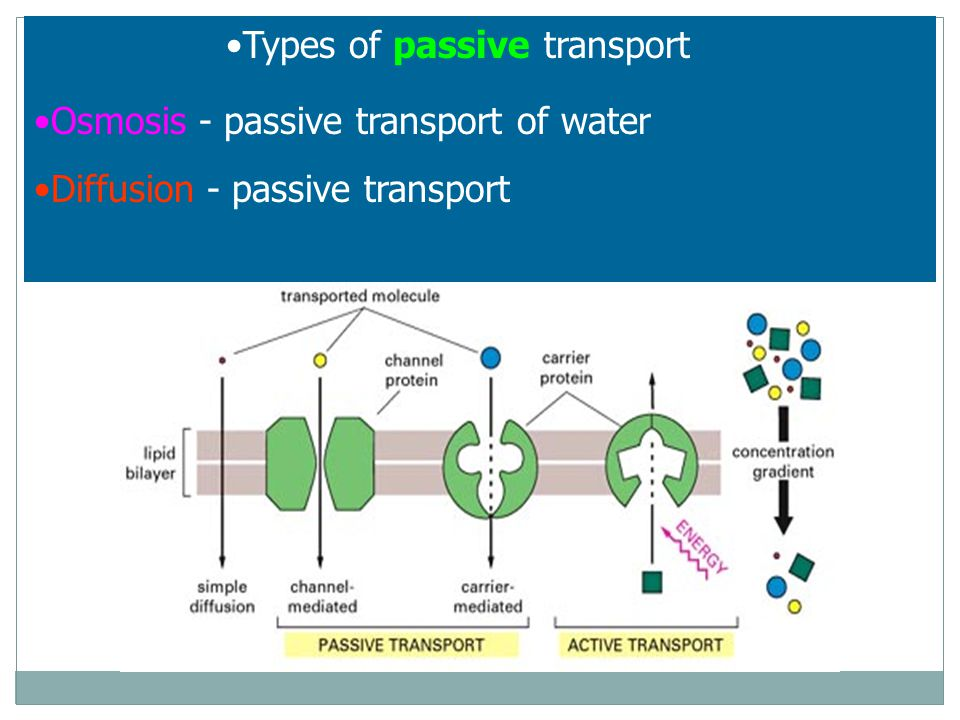 Types of passive transport