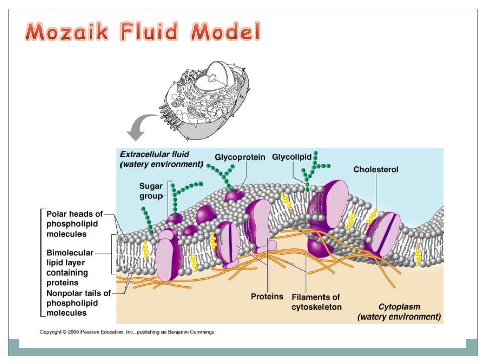 Mozaik Fluid Model