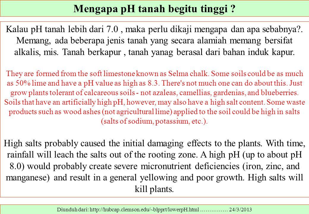 Mengapa pH tanah begitu tinggi