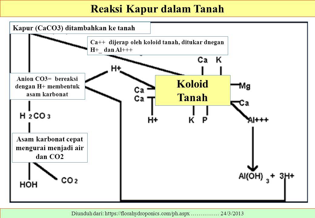 Reaksi Kapur dalam Tanah Koloid Tanah