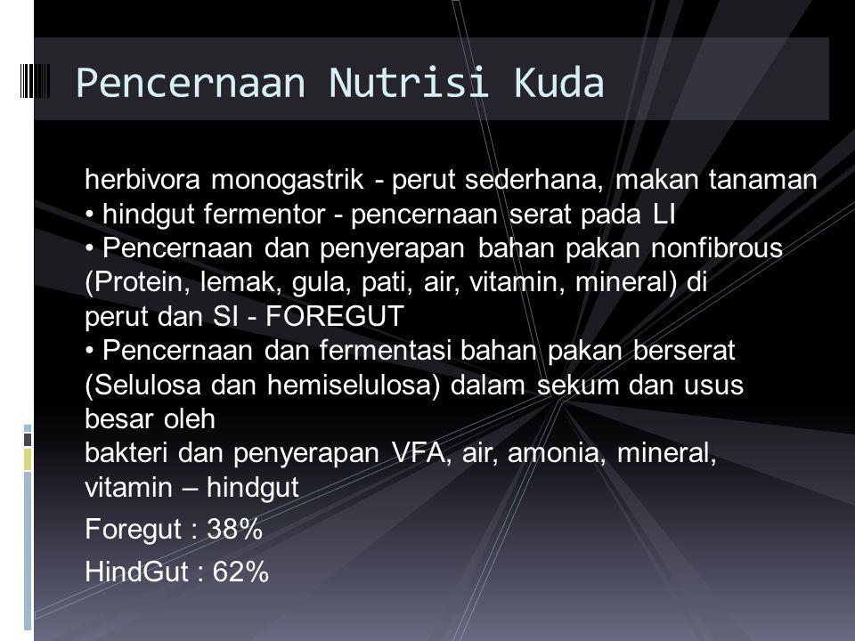 Pencernaan Nutrisi Kuda
