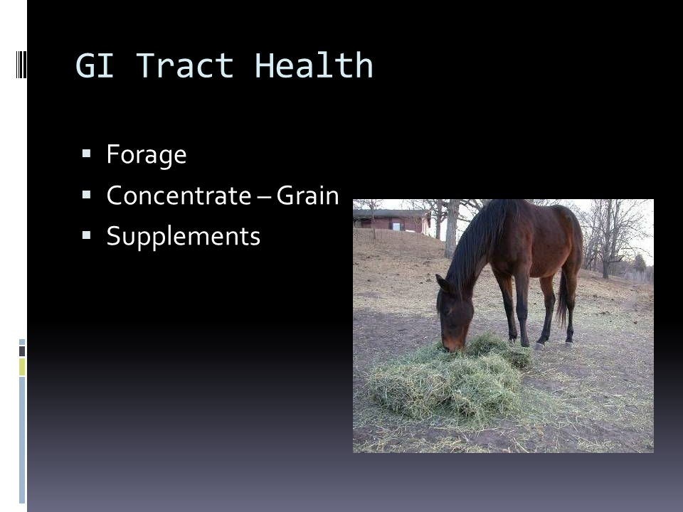 GI Tract Health Forage Concentrate – Grain Supplements