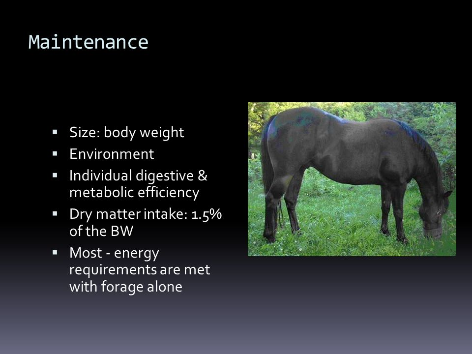 Maintenance Size: body weight Environment